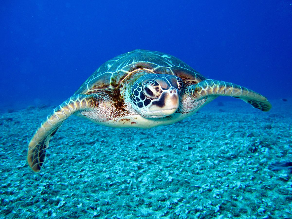 help save the sea turtles || Costa Rica yoga retreat
