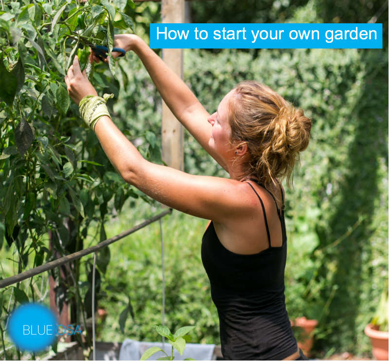 how to start your garden