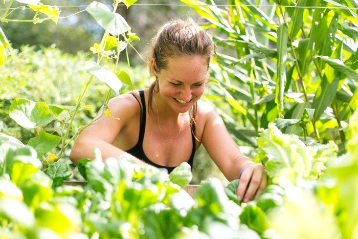 Go green - Eat healthy - Eat local!