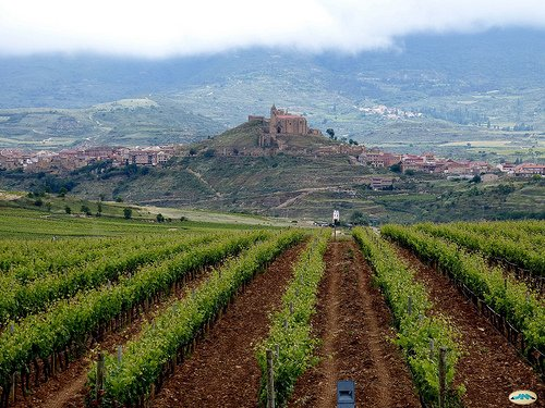 A guide to Spanish Wine