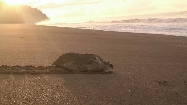 Top 5 Places to Help the Sea Turtles in Costa Rica