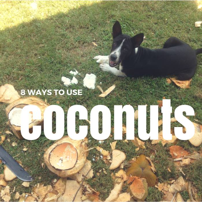 don't throw that coconut away at Blue Osa