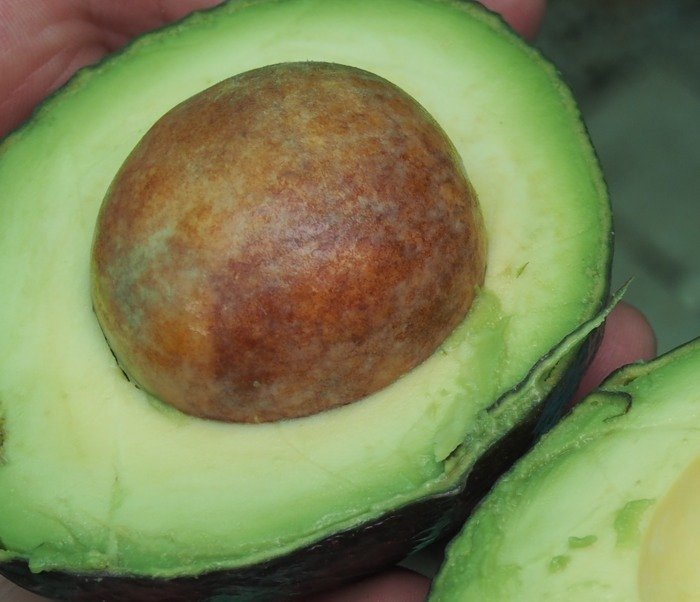 10 Products that make you look beautiful avocado
