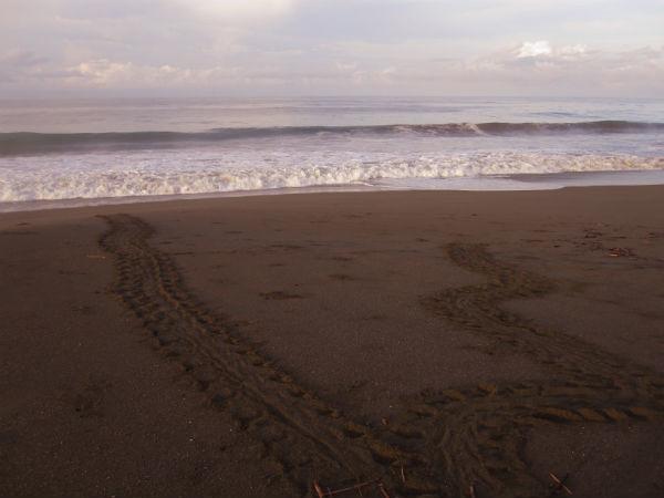 SEA-TURTLE-TRACKS