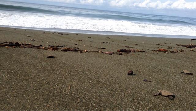 sea-turtles-released