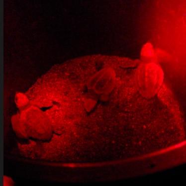 Red-Light_Sea_Turtles