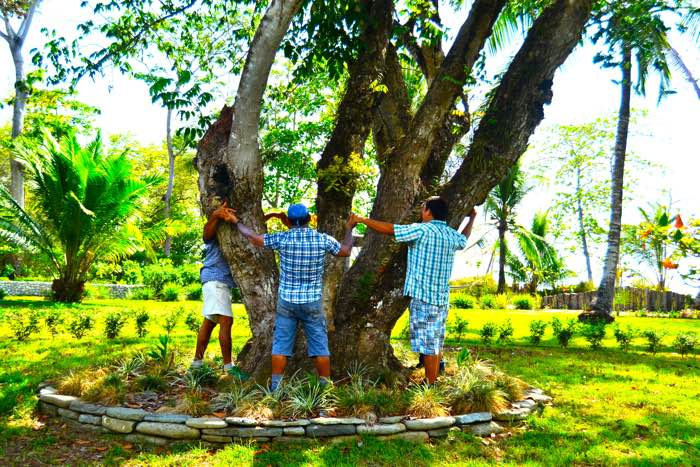 25 Fantastic Reasons To Pack Your Bags And Visit Blue Osa Right Now Tree