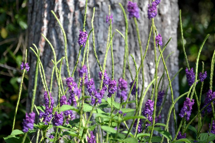 25 Fantastic Reasons To Pack Your Bags And Visit Blue Osa Right Now Fresh Lavender