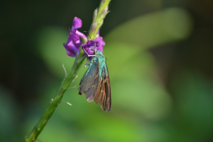 25 Fantastic Reasons To Pack Your Bags And Visit Blue Osa Right Now Nature and Butterflies