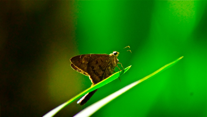 25 Fantastic Reasons To Pack Your Bags And Visit Blue Osa Right Now Butterflies
