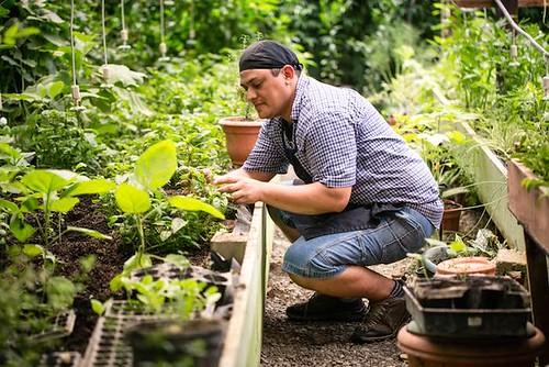 Cauliflower Pesto Recipe Blue Osa Yoga Costa Rica Chele in the garden