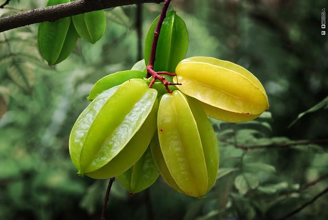 Starfruit. Star Fruit.