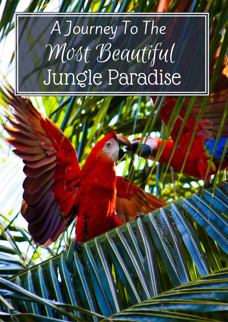 A Journey To The Jungle Paradise
