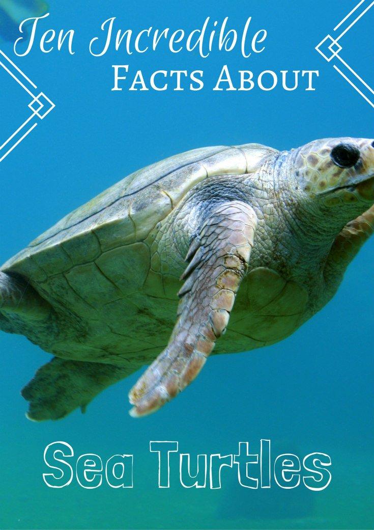 Ten Incredible Sea Turtle Facts
