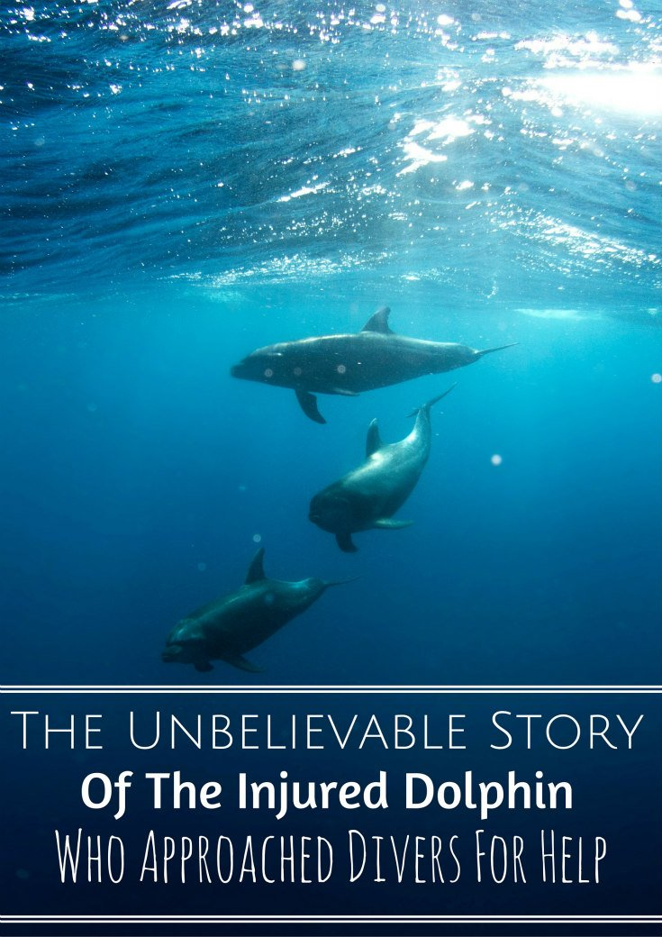 The Unbelievable Story Dolphin Asked Divers Help