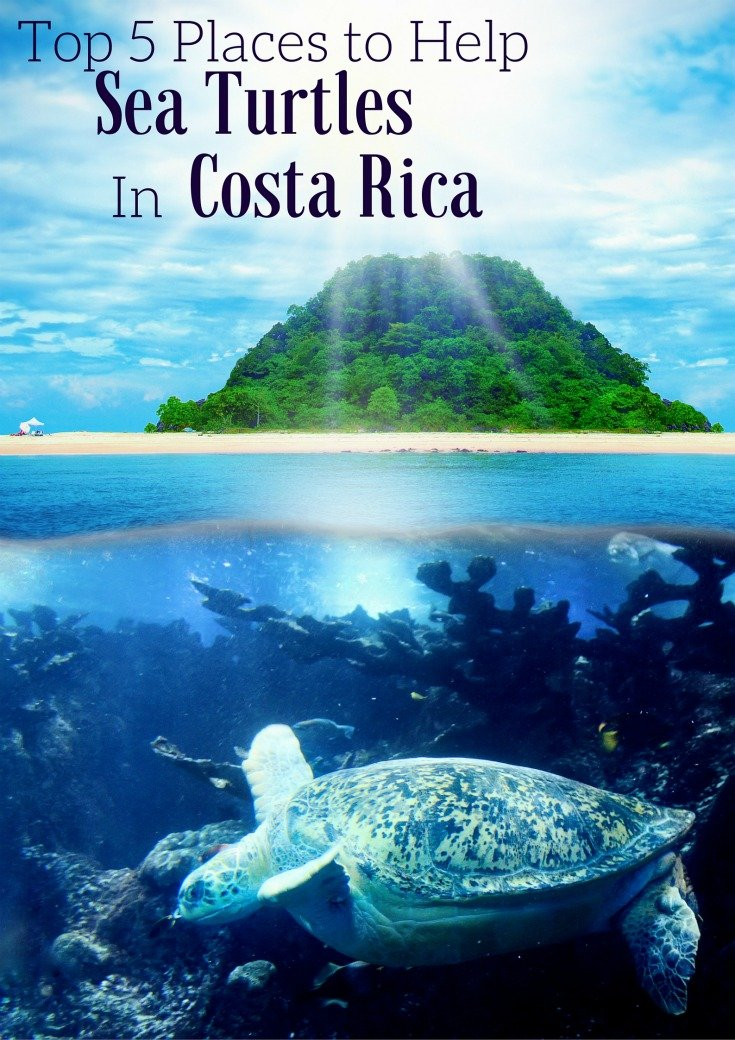 Top 5 Places to Help The Seaturtles In Costa Rica