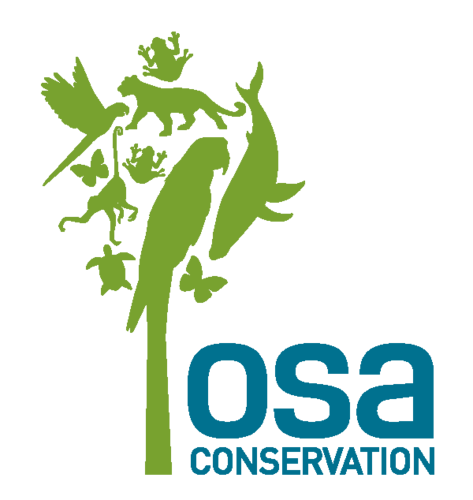 Osa Conservation Save The Sea Turtles In Costa Rica
