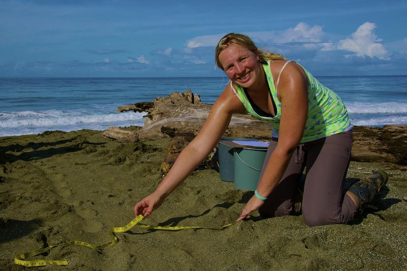 Learn how to identify turtle tracks